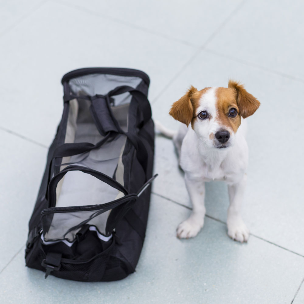 Small dog sits next to a travel bag