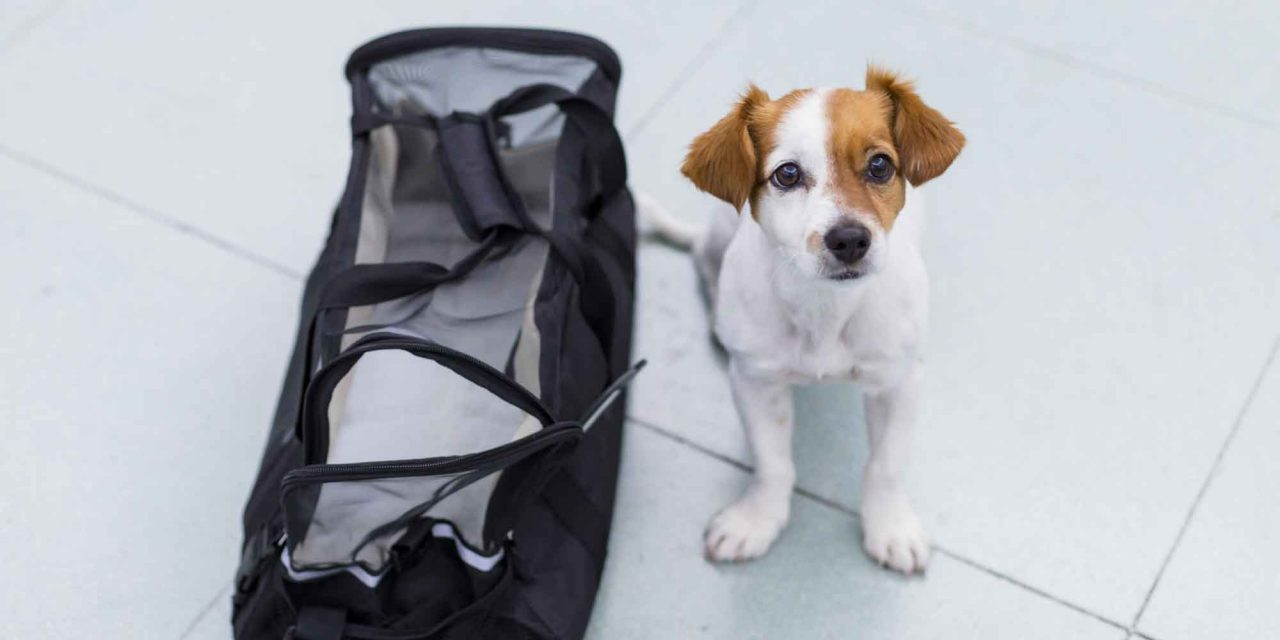 KleiSmall dog sits next to a travel bag